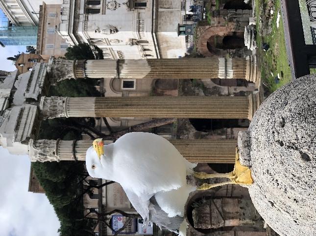 экскурсии из римини в рим на 2 дня Самаре